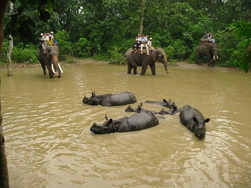 Jungle Safari combination tour